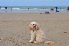 Netter Hund, der auf Strand sitzt stockfotografie
