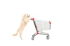 Netter Hund, der einen leeren Warenkorb drückt Stockfoto