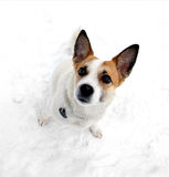 Netter Hund, der entlang der Kamera vom Schnee anstarrt Lizenzfreie Stockfotografie