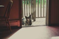 Netter Hund, der geduldig in einem Eingang an einem sonnigen Tag sitzt lizenzfreie stockfotografie