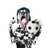 Netter Hund in der Kappe, die einen Fußball und ein Ruf und ein Schrei hält Stockfotos