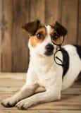 Netter Hund, der mit Gläsern spielt stockfotografie