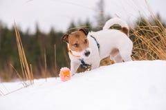 Netter Hund, der mit orange Ball auf Schneewehe spielt Stockbilder