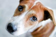 Netter Hund, der oben schaut stockbilder