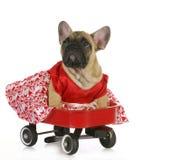 Netter Hund in einem Lastwagen Stockfotos