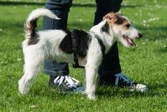 Netter Hund mit Inhaber Stockbild