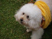 Netter Hund mit weichem Pelz auf dem Gras lizenzfreies stockbild