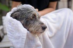 Netter Hund am Pflegen Lizenzfreies Stockfoto