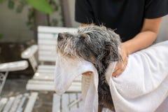 Netter Hund am Pflegen Stockfoto