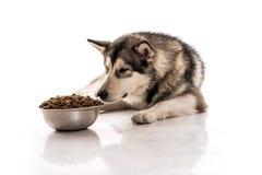 Netter Hund und sein trockenes LieblingsLebensmittel auf einem weißen Hintergrund Stockfotos