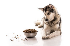Netter Hund und sein trockenes LieblingsLebensmittel auf einem weißen Hintergrund Lizenzfreie Stockfotografie