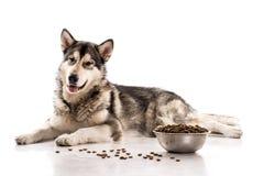 Netter Hund und sein trockenes LieblingsLebensmittel auf einem weißen Hintergrund Lizenzfreie Stockfotos