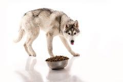 Netter Hund und sein trockenes LieblingsLebensmittel auf einem weißen Hintergrund Lizenzfreies Stockbild