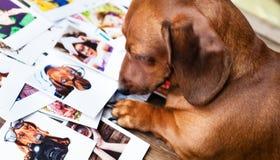 Netter Hund unter den Fotos Lizenzfreie Stockfotos