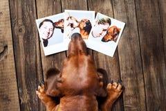 Netter Hund unter den Fotos Stockbild