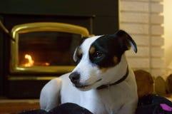 Netter Hund vor Kamin lizenzfreie stockfotografie