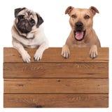 Netter Hunde-, Terrier- und Pughund, hängend mit den Tatzen auf dem leeren hölzernen fördernden Brettzeichen, lokalisiert auf wei lizenzfreies stockbild
