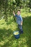 Netter Junge im Garten Stockfoto