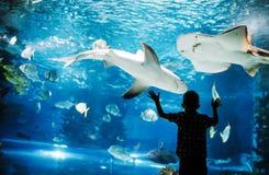 Netter Junge passt Fische im Aquarium auf stockfotografie