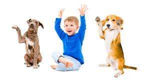 Netter Junge und zwei Hunde, die zusammen mit den Händen angehoben sitzen Stockfotografie