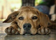 Netter junger Hund Lizenzfreie Stockbilder