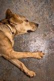 Netter junger Hund Stockfotos