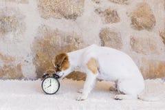 Netter junger Hund, der auf einer weißen Decke sitzt und den Ala betrachtet Stockfotos