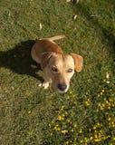 Netter junger Hund im Garten Lizenzfreies Stockfoto