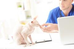 Netter junger Tierarzt, der dem Tier Lebensmittel gibt Lizenzfreie Stockbilder