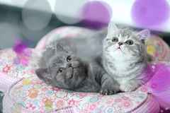 Netter Kätzchen Bokeh-Effekt Stockbild