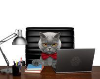 Netter Katzenmanager erledigt etwas Arbeit über den Computer Lokalisiert auf Weiß Stockfotografie