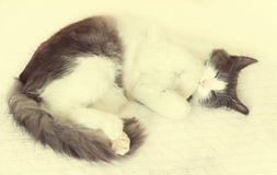 Netter Katzenschlaf Lizenzfreies Stockfoto