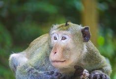 Netter kleiner Affe die Spezies ist gebürtig zu lebend und im Cer Lizenzfreie Stockbilder