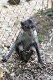 Netter kleiner Affe hinter Zaun Lizenzfreies Stockfoto