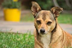 Netter kleiner brauner Hund im Freien Stockfotos