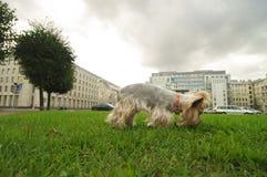 Netter kleiner Hund Lizenzfreie Stockfotografie