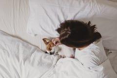 Netter kleiner Hund, der auf Bett mit ihrem Menschen liegt Haustiere zuhause relax lizenzfreies stockfoto
