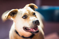 Netter kleiner Hund, der im Hinterhof spielt Lizenzfreie Stockfotografie