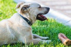 Netter kleiner Hund, der im Hinterhof spielt Stockfotos