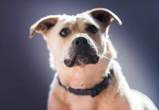 Netter kleiner Hund, der im Hinterhof spielt Lizenzfreies Stockbild