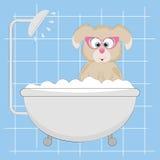 Netter kleiner Hund unter der Dusche Stockbild
