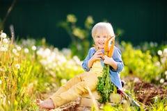 Netter kleiner Junge, der ein Bündel frische organische Karotten im inländischen Garten hält lizenzfreie stockfotografie