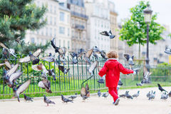 Netter kleiner Junge, der mit Tauben in der Stadt fängt und spielt Stockfotografie