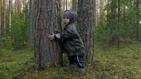 Netter kleiner Junge, der am Park im Kiefernwald geht, Spaß und hat und Bäume umarmt stock footage