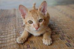 Netter kleiner roter Kätzchenabschluß herauf Porträt auf Matte stockbild