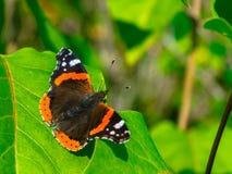 Netter kleiner Schmetterling bereit sich zu entfernen stockbild