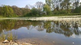 Netter kleiner See in den Niederlanden Lizenzfreies Stockbild