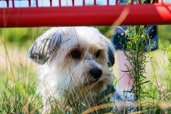 Netter, kleiner Terrierhund draußen Stockfoto
