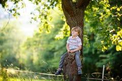 Netter Kleinkindjunge, der das Klettern auf Baum genießt Stockfotos