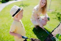Netter Kleinkindjunge, der im Garten mit seiner Mutter, Ernte des Kohls arbeitet stockbild